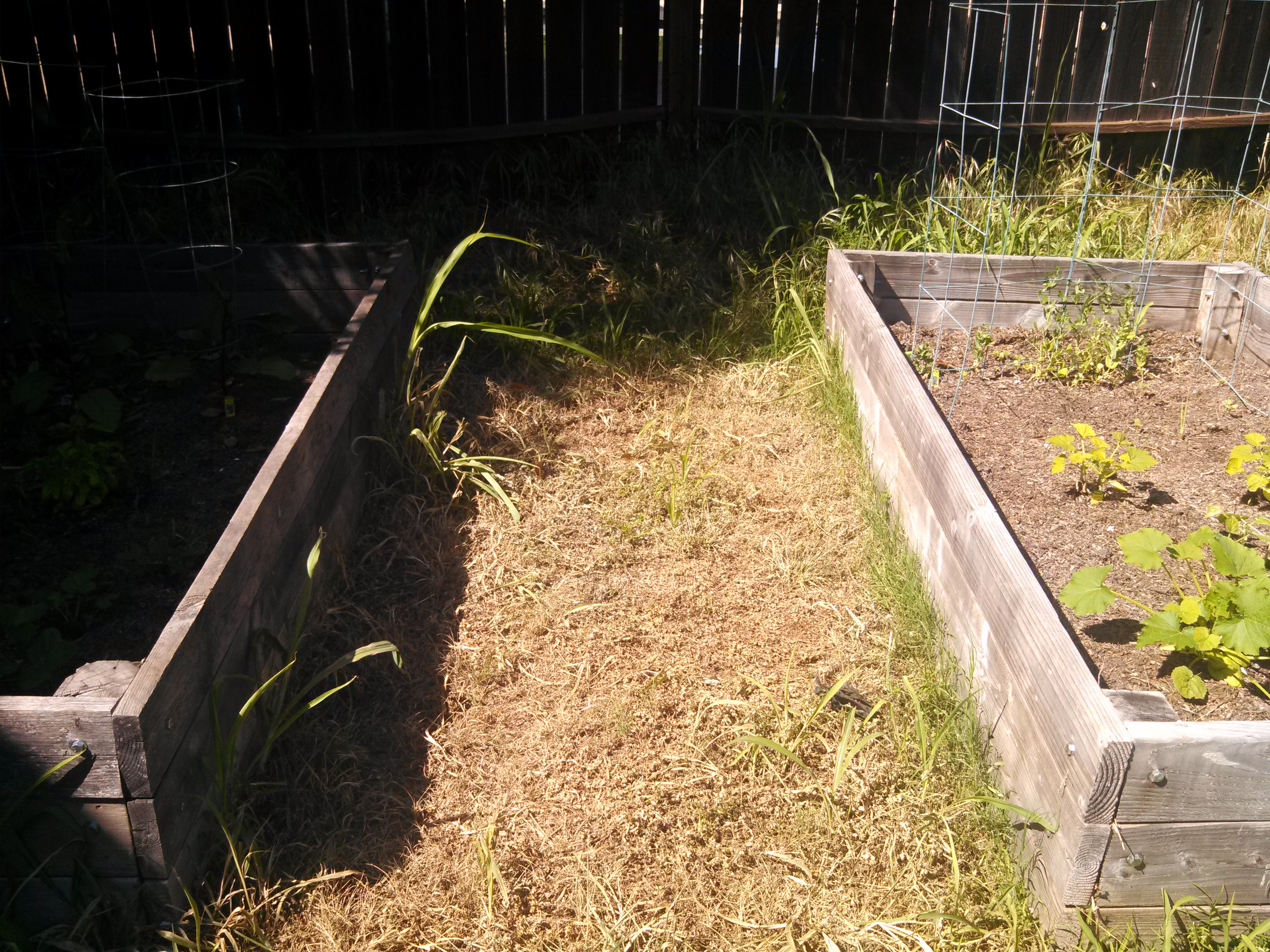 Garden after using vinegar, salt and soap mixture to kill weeds